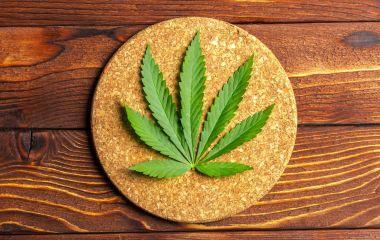 Fresh green Cannabis Leaf