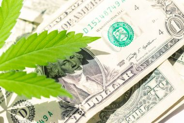 cannabis leaf and money