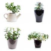 Fotografie zelené rostliny v květináči na bílém pozadí