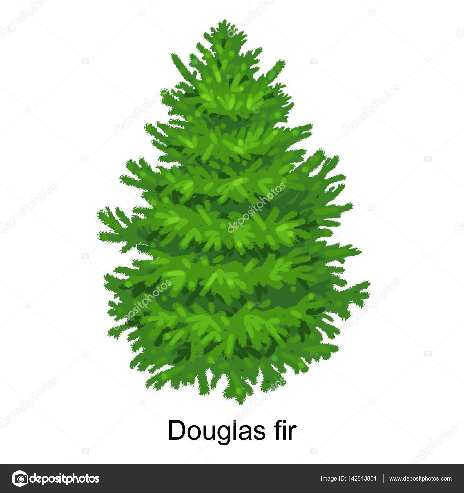 Douglasie Weihnachtsbaum Kaufen.Weihnachtsbaum Vektor Wie Douglasie Für Silvester Feier Ohne Urlaub