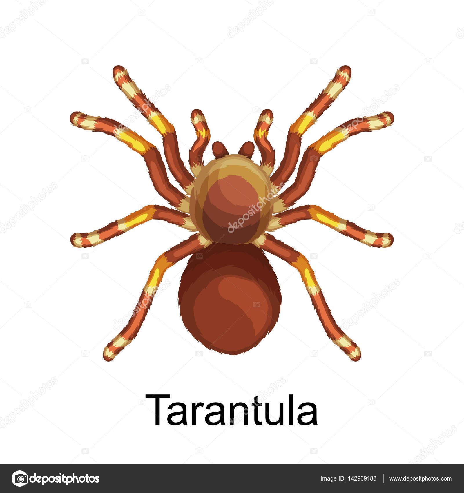 Colección de insectos peligrosos, set de dibujos animados de arañas ...