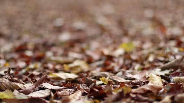 Autumn foliage. Autumn leaves.