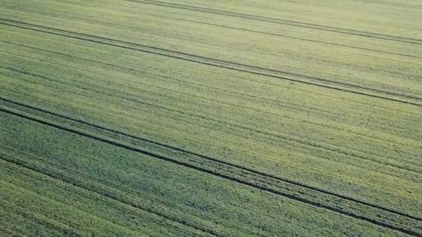 Zelené pole antény pole v brzy na jaře.