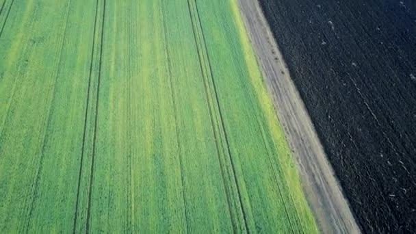Zöld mező légi mezők kora tavasszal.