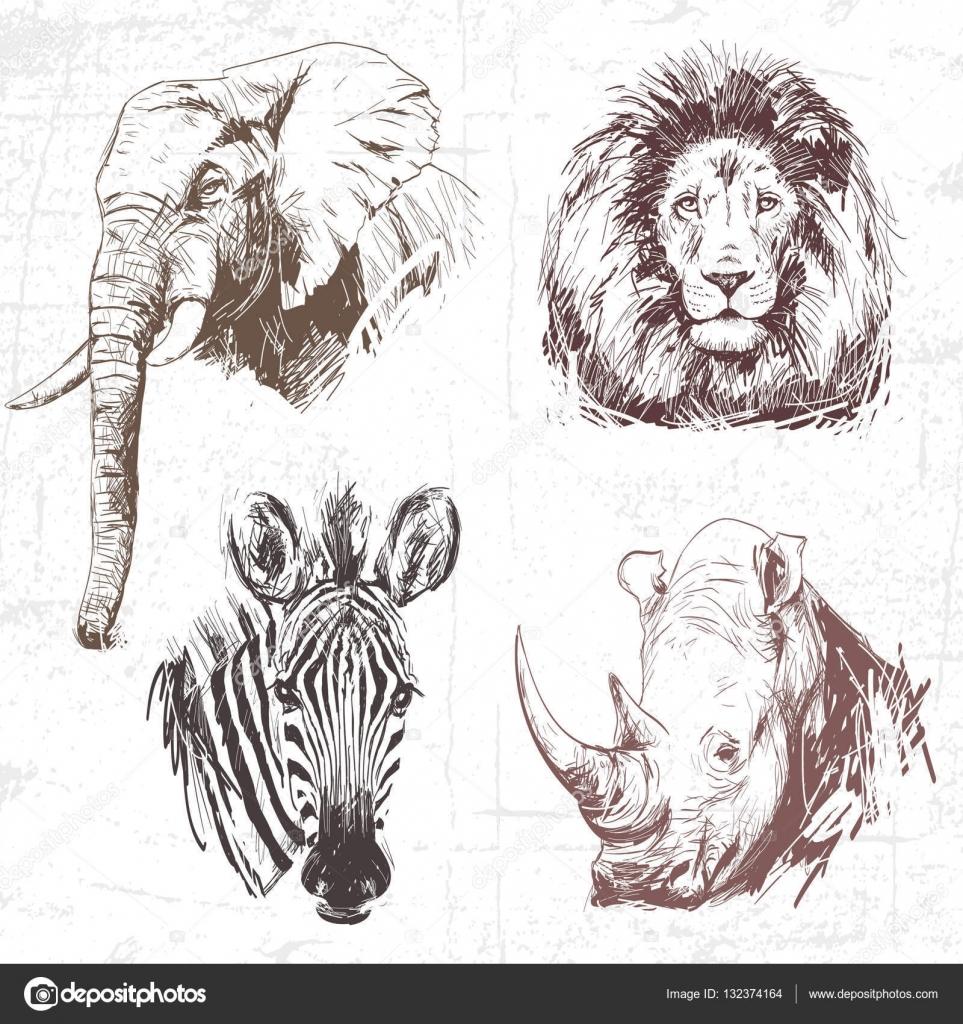 Line Drawings Of African Animals : (非洲) 世界各地的动物。手绘插图 (原件,没有跟踪) 的集合。描述︰ 一种颜色每个都绘图有 — 图库矢量图像