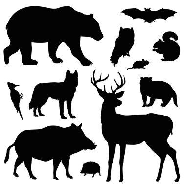 forest animal vector illustration set