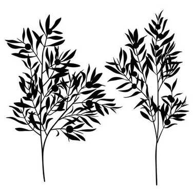 branches leaves olive silhouette set isolated on white