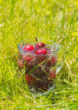 ripe cherry in water on the grass on a summer day.