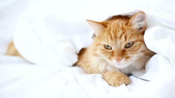 Zázvor kočka leží na posteli. Roztomilý útulné spaní doma.