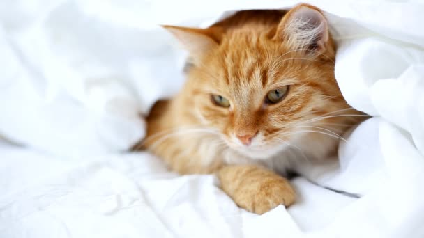Ginger cat lies on bed. Cute cozy bedtime at home.