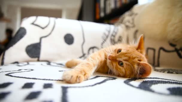 Cute ginger kitty comfortably snuggles on blanket in bed. Cozy morning at home.