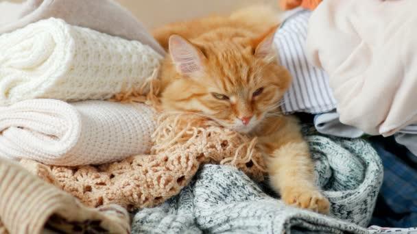 Roztomilý kočičí spí na hromádce pletené oblečení. Teplé pletené svetry a šály jsou složené v hromadách. Nadýchané pet je podřimoval mezi vesty. Útulný domov pozadí