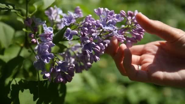 Žena nalezla štěstí, květ lila buše. Přírodní pramen pozadí rozkvetlé květy