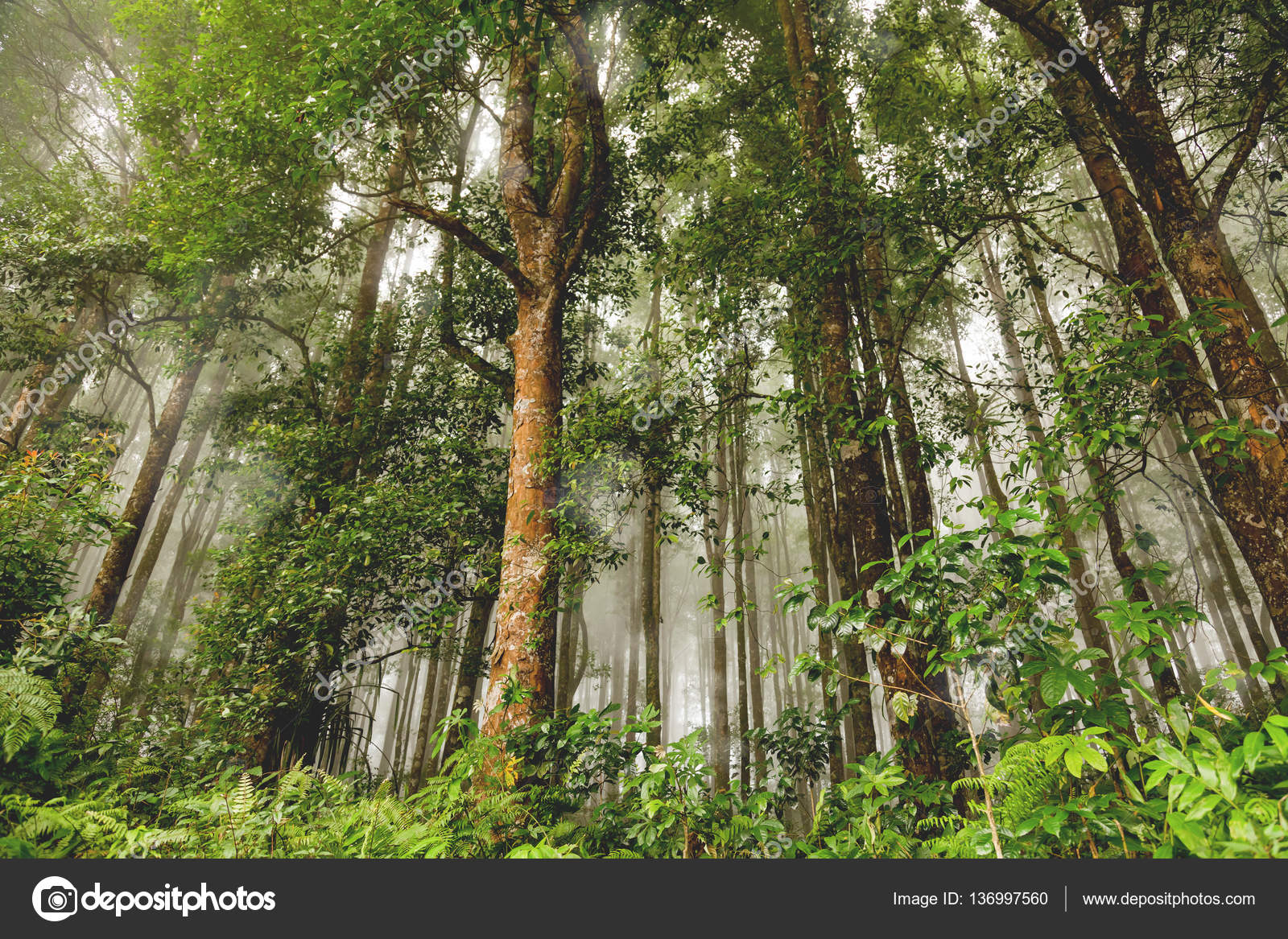 Evergreen Jungle Forest After Rain Natural Misty Background Bali