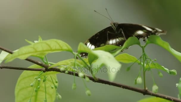 Butterfly on leaf macro insect life in the tropical rain forest. Kuala-Lumpur Malaysia. Natural background.