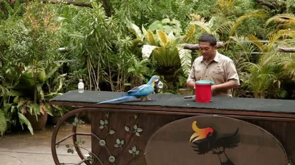 Kuala Lumpur, Malesia - 3 febbraio 2013. Spettacolo di uccelli nel Parco degli uccelli di Kuala Lumpur. Pappagalli mostrano diversi trucchi