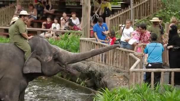 Singapur, Singapur - 18. ledna 2013. Slon show. Turisté krmení vyškolení sloni a Fotografie z nich