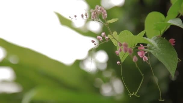 Természetes háttér halvány rózsaszín virágok.