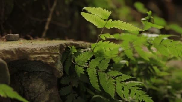 Přírodní pozadí s zelené kapradí