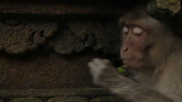 Majom ülő statue, és keres a szőr rovarok. Mohos szobrok a Monkey forest. Ubud, Bali, Indonézia.