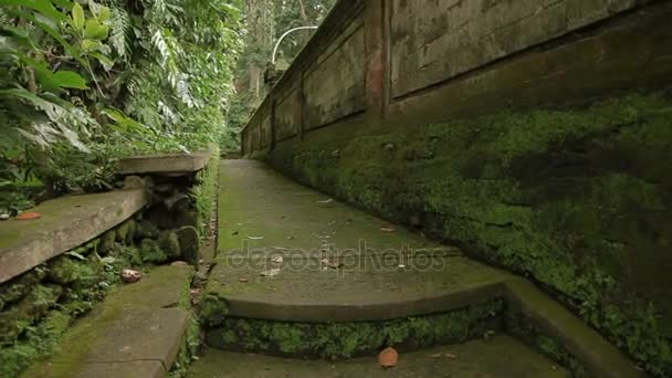 Mossy walls and sculptures in Monkey forest. Ubud, Bali, Indonesia.