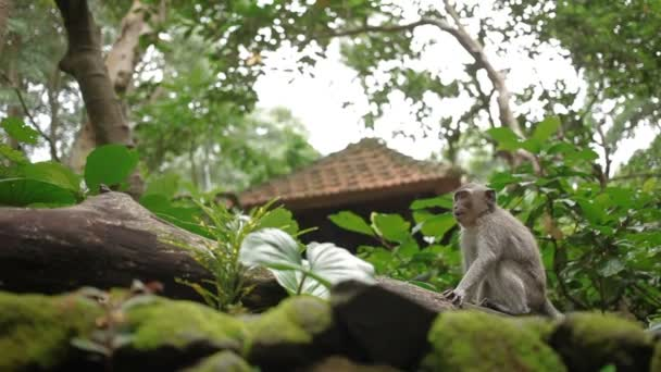 Monkey sitiing on tree. Monkey forest in Ubud, Bali, Indonesia.