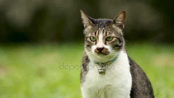 Aranyos foltos macska-val egy harang, a gallér, ül a gyep fű. Lumpini park, Bangkok, Thaiföld.