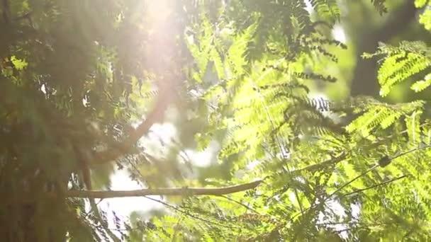 Slunce svítí skrz větve stromů. Lumpini parku. Bangkok, Thajsko.