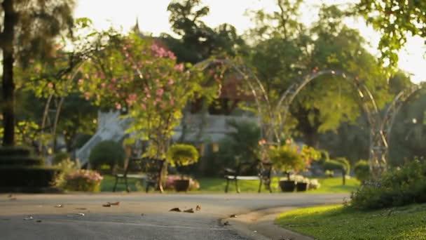 Zierpflanzen und Bäume im Garten. Palmen, Blumen und dekorativen ...