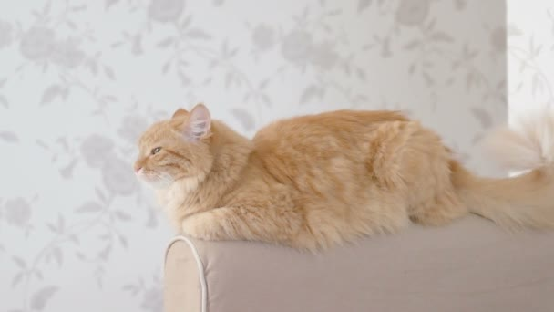 Cute ginger cat lying on arm of sofa. Fluffy pet is going to sleep. Cozy home background.