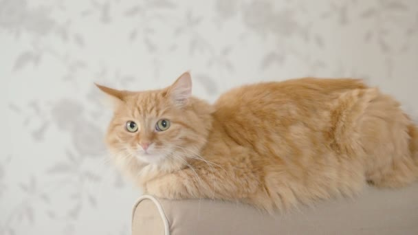 Cute ginger cat lying on arm of sofa. Fluffy pet is going to sleep. Cozy home background. Flat profile.