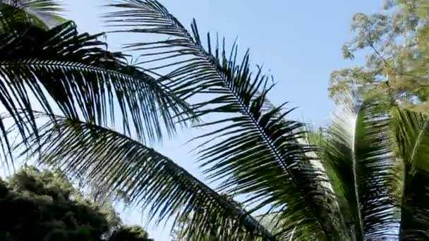 Natural background with evergreen tropical plants and palm trees. Bottom view of trees foliage. Phuket, Thailand.