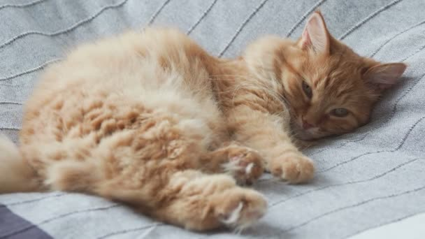 Cute ginger cat lying in bed on grey blanket, Fluffy pet is going to sleep. Cozy home background.