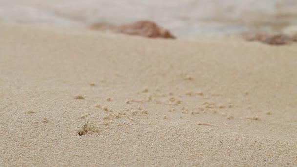 Маленькие крабики делают дырки в песке
