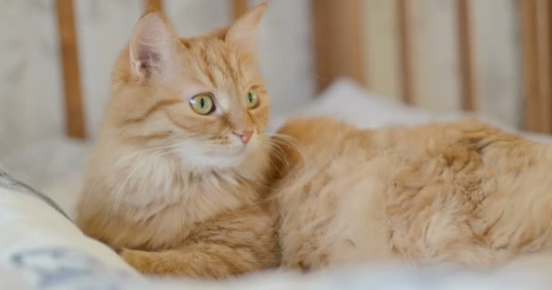 Cute curious ginger cat lying in child bed. Fluffy pet lying in crib. Cozy morning at home.