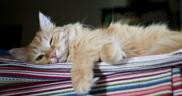 Carino gatto dello zenzero che si trova sul tessuto a righe. Animale domestico lanuginoso confortevole si stabilì a dormire.