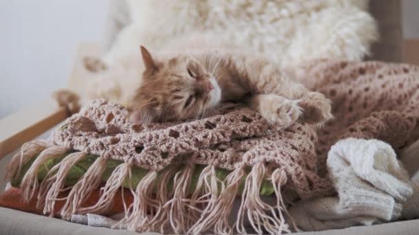 Roztomilá zrzavá kočka spící na béžové pletené látce. Chlupatý mazlíček v útulném domě.