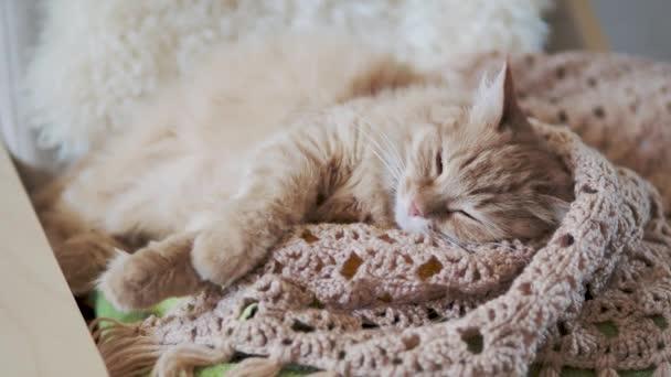 Aranyos vörös macska alszik bézs kötött szövet. Bolyhos kisállat a hangulatos otthon.