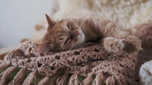 Cute ginger cat sleeping on beige knitted fabric. Fluffy pet in cozy home.