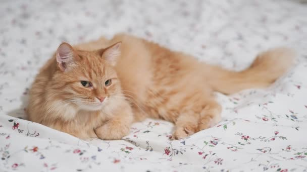 Cute ginger cat lying in bed. Fluffy pet in cozy home.