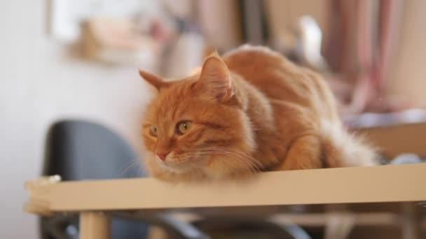 Auf dem Tisch sitzt eine neugierige Ingwerkatze. Flauschiges Haustier schaut aufmerksam. Pelziges Haustier zu Hause.