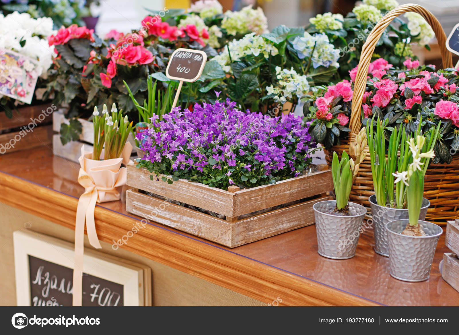 различные красивые цветы деревянные ящики цветочные горшки