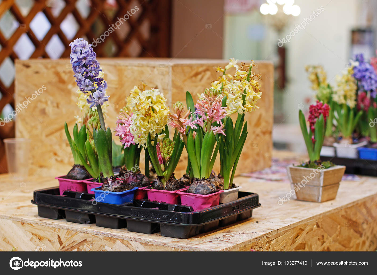 Colorful Beautiful Hyacinth Flowers Plastic Flower Pots Stand