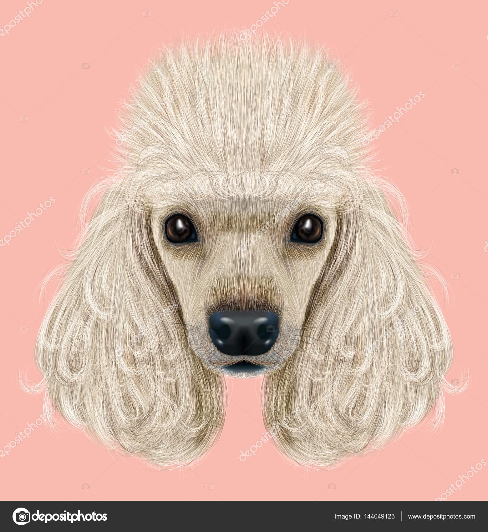 Dibujo Perro Retrato Del Caniche Fotos De Stock Antart 144049123