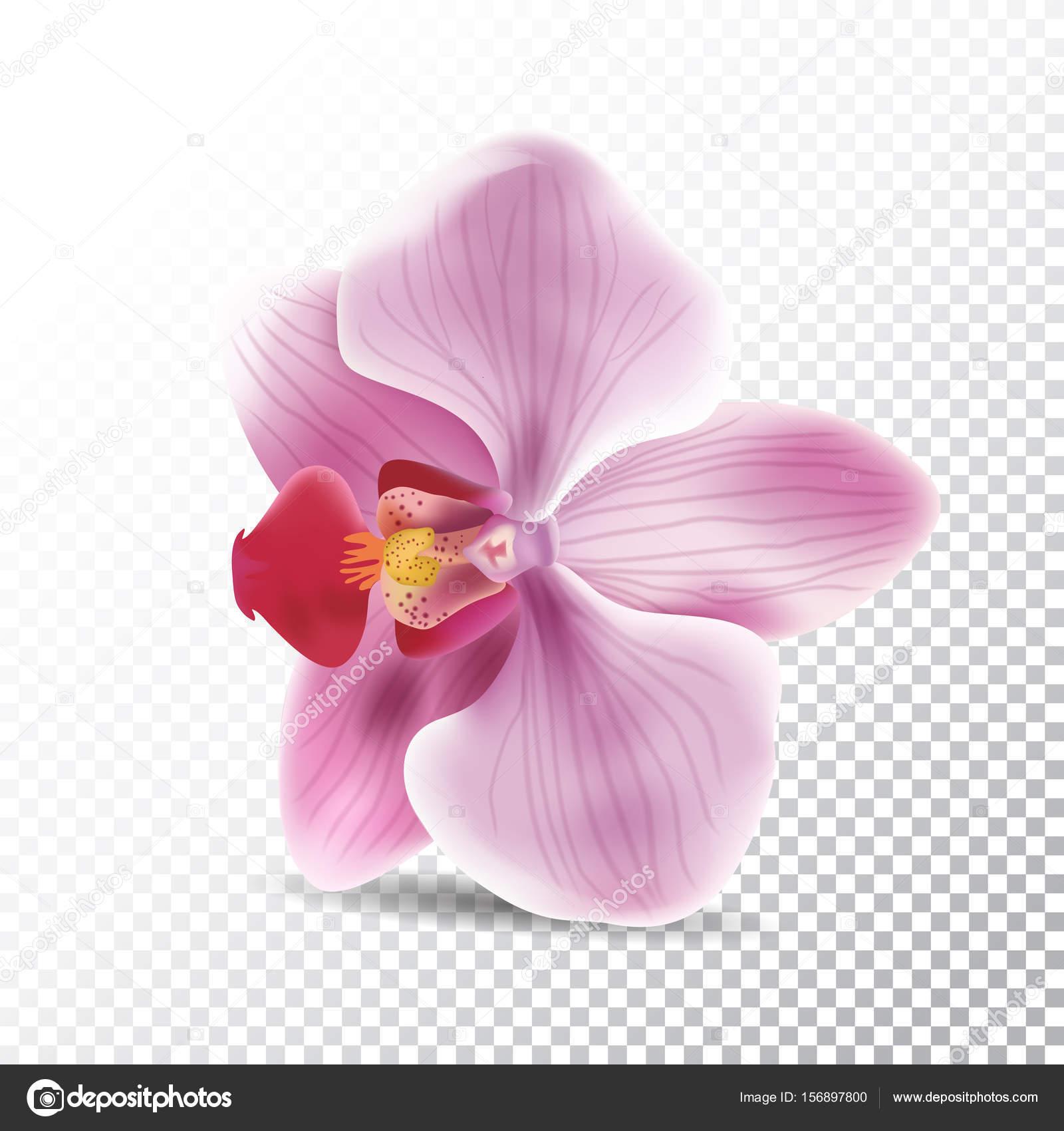蘭の花は、透明な背景に分離されました。オーキッド ピンク花のベクトル
