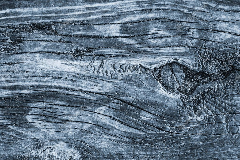 Old Knotted Wood Weathered Rotten Cracked Bleached And Stained Powder Blue Grunge Texture