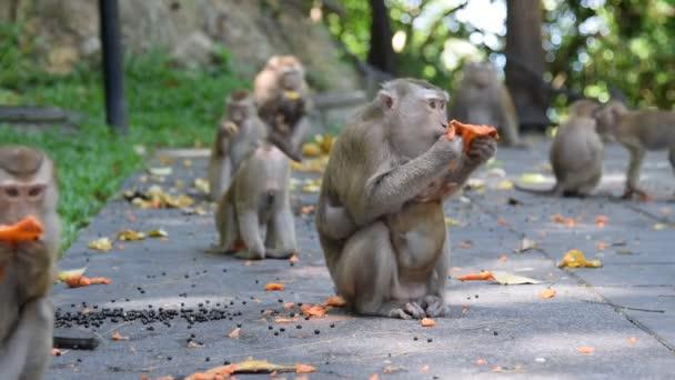 Majom enni valamit a park