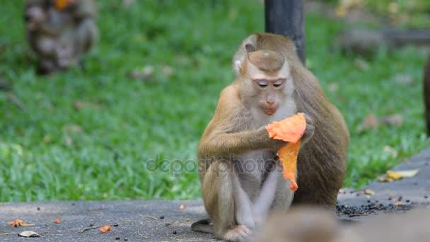 Opice se najíst v parku
