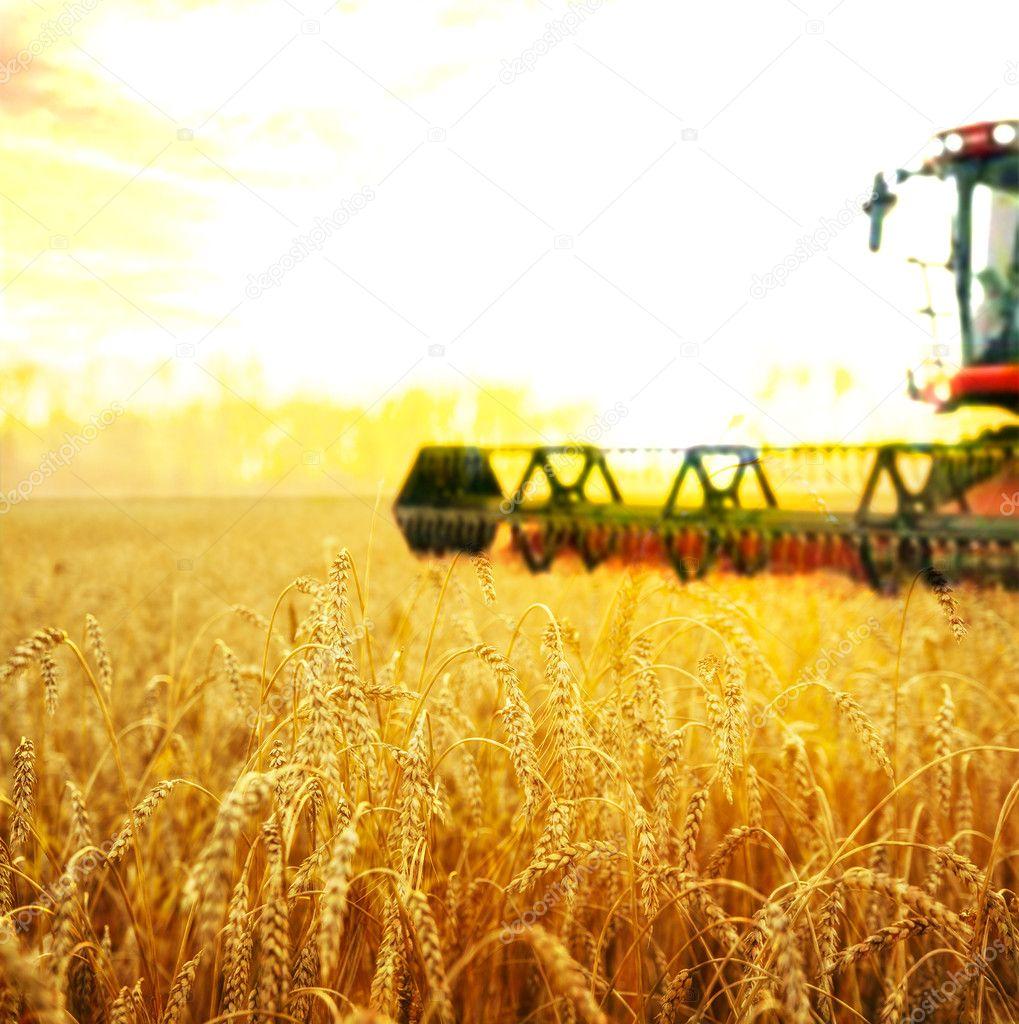 Harvesting machine on  field