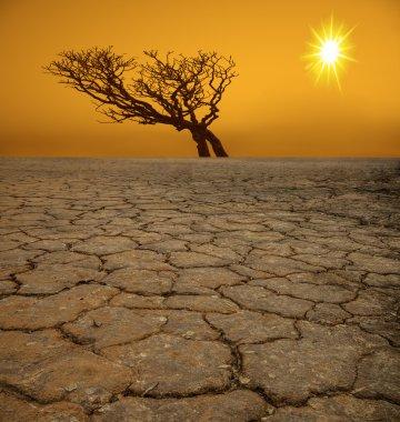 tree on cracked earth in desert